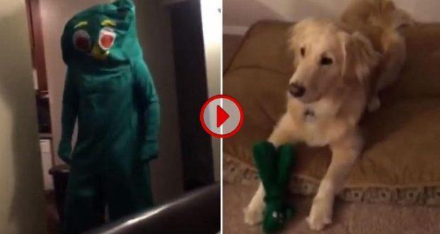 Al Perro Ver Dueño Favorito Video A Dsfrazado Juguete Su Reacciona De 0Ok8wnP