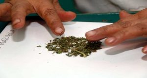 México importará de Estados Unidos marihuana medicinal