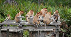 Estudio indica que los monos que comen menos viven más tiempo