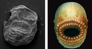 Localizan el que se considera el ancestro humano más antiguo