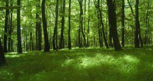 Científicos crean un árbol sintético que produce electricidad