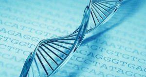 Revelan que una terapia genética logra restaurar ciertas funciones auditivas