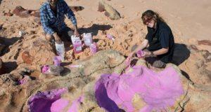 Descubren en Australia un yacimiento con más de 150 huellas de dinosaurios