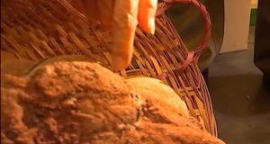 Localizan varios huevos de dinosaurios fosilizados en China
