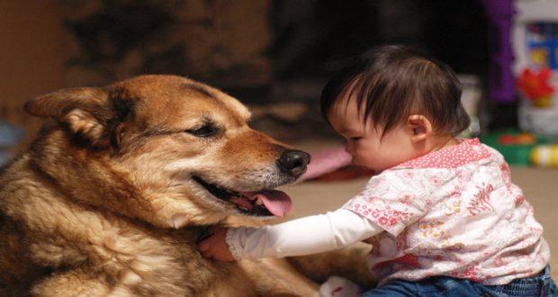 Tener perro podría reducir el riesgo de alergias y obesidad | La Region