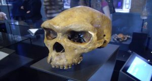 Los huesos de 300 mil años de antigüedad que fueron encontrados en Marruecos revelan que el Homo Sapiens evolucionó a través de África 100 mil años antes de lo que pensaba