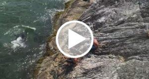 Dos nadadores fueron perseguidos por un grupo de orcas [Video]