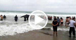Turistas se unen para rescatar a una ballena jorobada [Video]
