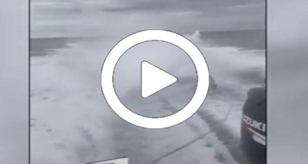 Autoridades buscan a unos jóvenes que se grabaron maltratando a un tiburón [Video]