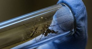 Google se une a la batalla contra el virus del Zika