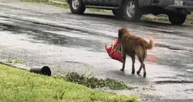 Los animales también sufrieron los embates del huracán Harvey