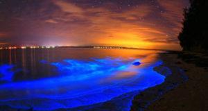 Las cinco playas bioluminscentes en México
