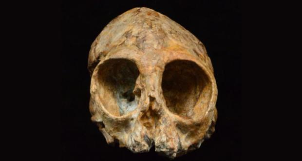 Un cráneo de 13 millones de años, notablemente bien conservado, de una nueva especie de primate arroja nueva luz sobre los orígenes africanos de los humanos y los simios.