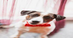 ¡Cuidado! Un cachorro no es un juguete para regalar el Día de Reyes ya que el 70 por ciento de las personas que compran o reciben como regalo un animal de compañía, lo abandonan durante el primer año de vida.