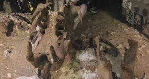 Encuentran en México un fósil de perezoso gigante con más de 12 mil años de antigüedad