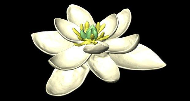 """Los científicos """"recrearon"""" una planta de 140 millones de años de antigüedad que es el antepasado de todas las especies vivas"""