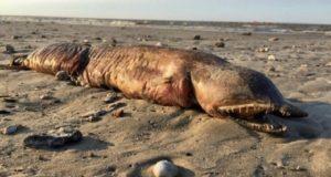 Huracán Harvey arroja extraña criatura dentada a las playas de Texas