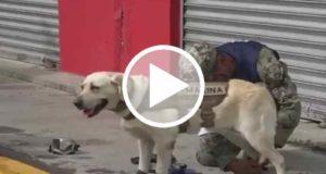 Animales de rescate se unen para localizar víctimas del sismo