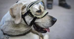 Actores que han admirado el trabajo de la perra rescatista, Frida
