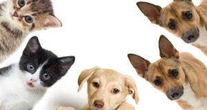 Mascotas se unen a la causa de ayudar a los afectados por el sismo.