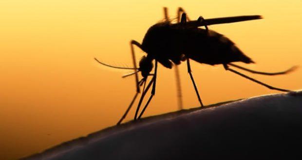 Investigadores usan muestras del virus Zika para combatir el cáncer cerebral