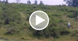 Fallece al intentar tomarse una foto con un elefante salvaje [Video]