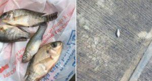 Una extraña lluvia de peces cae en la ciudad de Tampico. El suceso fue compartido por habitantes y elementos de Protección Civil en redes sociales. ¿A qué se debe este extraño fenómeno?