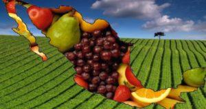 mapa de mexico con frutas sector agropecuario