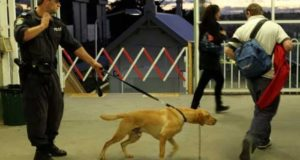Estudio indica que es verdad que los perros pueden percibir el miedo de las personas