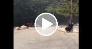 Mascotas también logran ser salvadas de los incendios forestales que azotan California [Video]