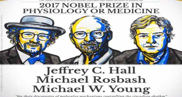 Descubridores de reloj biológico del cuerpo humano ganan el Nobel de Medicina