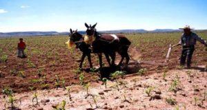 La agricultura familiar sigue siendo la base del desarrollo regional en México por lo que es necesario aumentar su capacidad productiva.