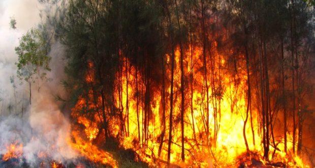 Las condiciones de sequía aumentan el riesgo de incendio/Imagen: Sie7e