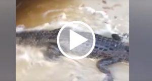 Turista británica graba el momento en que es atacada por un cocodrilo
