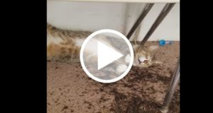 Reacciones de gatos después de comer marihuana se vuelven virales [Video]