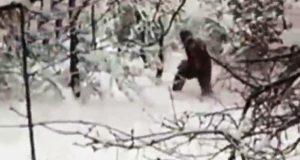 Estudian la composición del ADN del supuesto hombre de las nieves