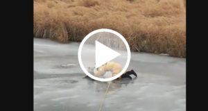 Graban a un bombero canadiense rescatando a un perro que cayó a un lago congelado