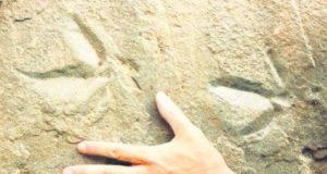 Localizan en Guanajuato huellas de aves con cientos de años de antigüedad