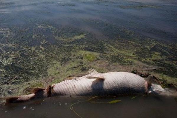 Cambio climático principal causa del aumento de zonas muertas en el océano: Estudio