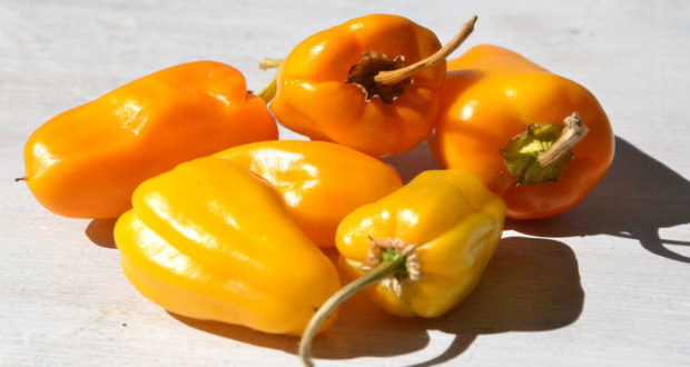 La comida con picante puede resultar beneficiosa para salud, aunque en exceso también perjudica.