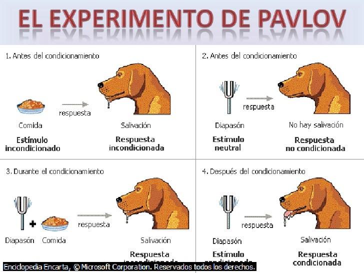 Experimento de condicionamiento-perro