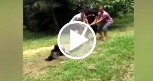 Documentan el rescate de un perro que era devorado por una anaconda [Video]