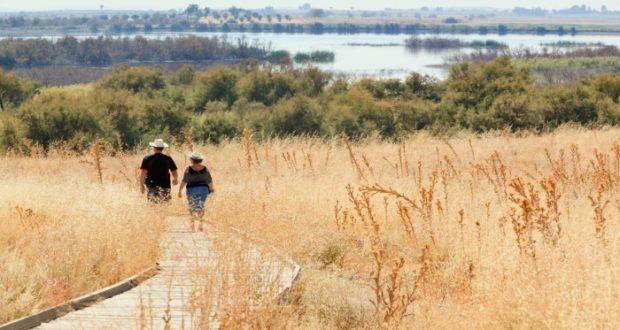 De acuerdo con tu modo de caminar se pueden diagnosticar si padeces un tipo de demencia