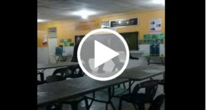 Elefante entra en una escuela y crea pánico entre los estudiantes [Video]