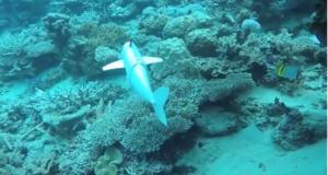 Un nuevo invento puede ayudar a analizar la vida marina sin afectar su entorno ni causar daños a los arrecifes.