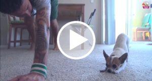 Video que muestra una clase de yoga para perros se vuelve viral