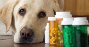 Veterinarios alertan de los peligros de automedicar a las mascotas