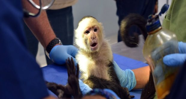 Mono Capuchino CDMX