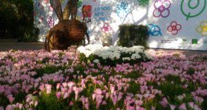 La Ciudad de México se llena de colores y aromas con el Festival de Flores y Jardines . FYJA 2018 en el Jardín Botánico de Chapultepec   Fechas y horarios