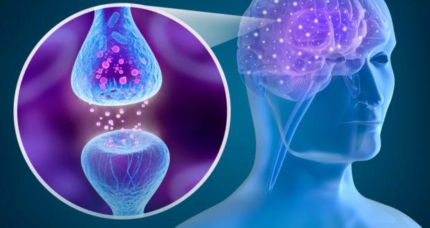 sinapsis y plasticidad en el cerebro